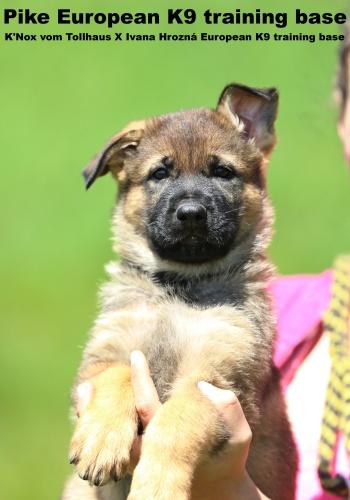 International dogschool K9 - dog training, sale of dogs